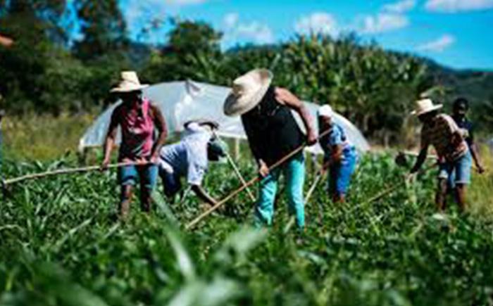 Garantia-Safra vai cobrir perdas de agricultores familiares com a ...